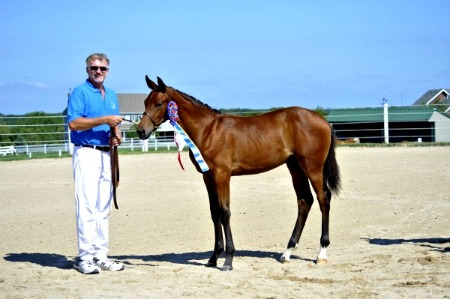 Jeff with Foal Champion Sondrio at the 2011 Oldenburg Approvals